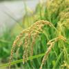 kế toán hợp tác xã nông nghiệp